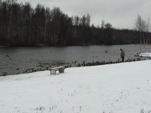 Patos de alimentación en el río en invierno imagen de archivo libre de regalías