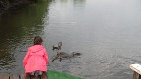 Patos de alimentación de la niña en parque El niño lanza el pan a un pato con sus anadones 4K almacen de video