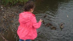 Patos de alimentación de la niña en parque El niño lanza el pan a un pato con sus anadones 4K almacen de metraje de vídeo