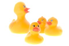 Patos de borracha Fotografia de Stock