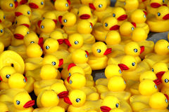 Patos de borracha Fotografia de Stock