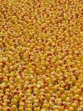 Patos de borracha Foto de Stock