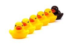 Patos de borracha Fotografia de Stock Royalty Free