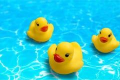 Patos de borracha Imagens de Stock