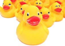 Patos de borracha amarelos Fotografia de Stock Royalty Free