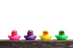 Patos de borracha coloridos Imagens de Stock
