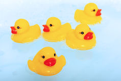 Patos de borracha na água azul Imagem de Stock