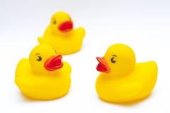 Patos de goma imagen de archivo libre de regalías