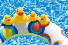 Patos de goma   Imagenes de archivo