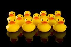 Patos de goma amarillos en filas Imágenes de archivo libres de regalías