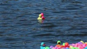 Patos de goma coloridos en raza del río