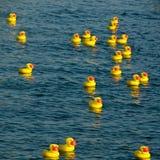 Patos de goma que flotan en el río fotos de archivo libres de regalías