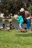 Patos de la alimentación de la niña de las ayudas del abuelo en el lago Foto de archivo libre de regalías
