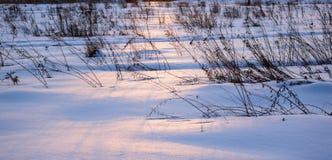 Patos de la invernada imagenes de archivo