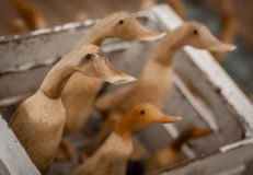Patos de madera para la venta Imagen de archivo