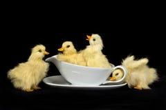 Patos del bebé en tazón de fuente de la salsa imagen de archivo libre de regalías