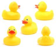 Patos del juguete Foto de archivo libre de regalías