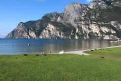 Patos e cisnes da limpeza da manhã no lakeshore Imagem de Stock