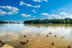 Patos e gansos no rio com Kennedy Center no fundo fotografia de stock royalty free