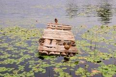 Patos em um cais de madeira na lagoa Pato do sono na ponte de madeira velha com opinião do mar imagem de stock royalty free
