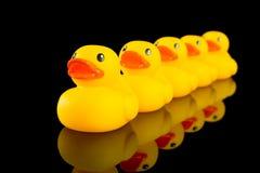 Patos em uma fileira Fotos de Stock