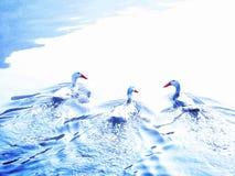 Patos em uma lagoa foto de stock