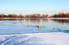 Patos en Central Park Imagen de archivo libre de regalías