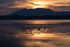 Patos en el agua en la salida del sol foto de archivo