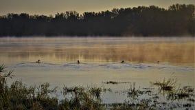 Patos en el amanecer foto de archivo libre de regalías