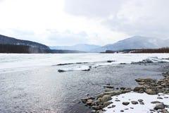 Patos en el río Imagen de archivo libre de regalías