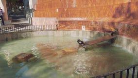 Patos en fuente en el centro del castillo de Concepción almacen de video