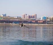 Patos en iver la ciudad Imagen de archivo