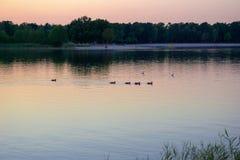 Patos en puerto con los yates en fondo Barcos y patos que parquean en agua foto de archivo