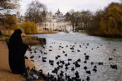 Patos en un lago foto de archivo