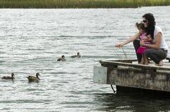 Patos en un lago Fotos de archivo libres de regalías