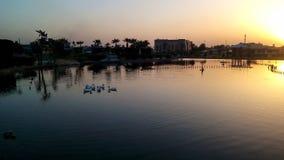 Patos en una charca en la puesta del sol foto de archivo libre de regalías