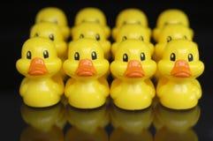 Patos en una fila Imágenes de archivo libres de regalías