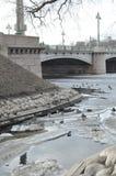Patos en una isla de piedra en St Petersburg en el puente en la primavera Imagen de archivo libre de regalías