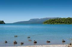 Patos, lago & montanha - Tarawera fotos de stock royalty free