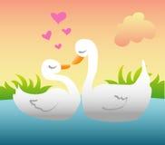 Patos Loving Fotos de Stock