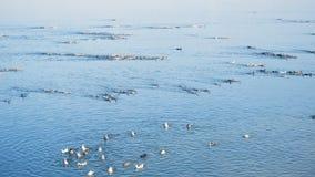 Patos na lagoa vídeos de arquivo