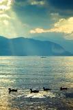 Patos no lago Foto de Stock Royalty Free