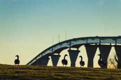 Patos no por do sol contra o Gov Thomas Johnson Bridge fotografia de stock royalty free