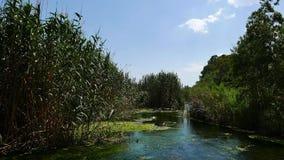 Patos nos rios mediterrâneos 01 vídeos de arquivo