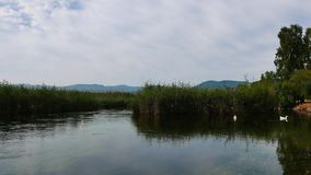 Patos nos rios mediterrâneos 03 filme