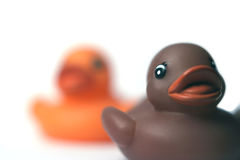 Patos plásticos Fotos de Stock