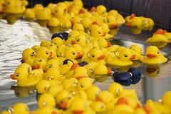 Patos plásticos amarelos Fotografia de Stock Royalty Free