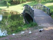 Patos por el puente Imágenes de archivo libres de regalías