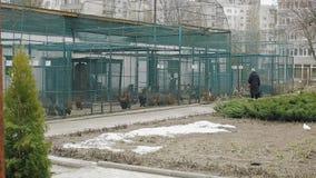 Patos preciosos detrás de barras en un jardín botánico almacen de video