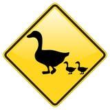 Patos que cruzan el cuidado Foto de archivo libre de regalías